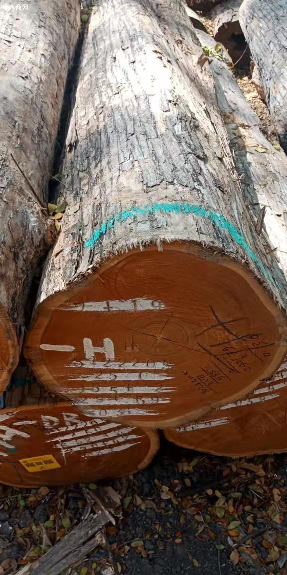 印尼柚木(政府自然林)原木大量原产地批发