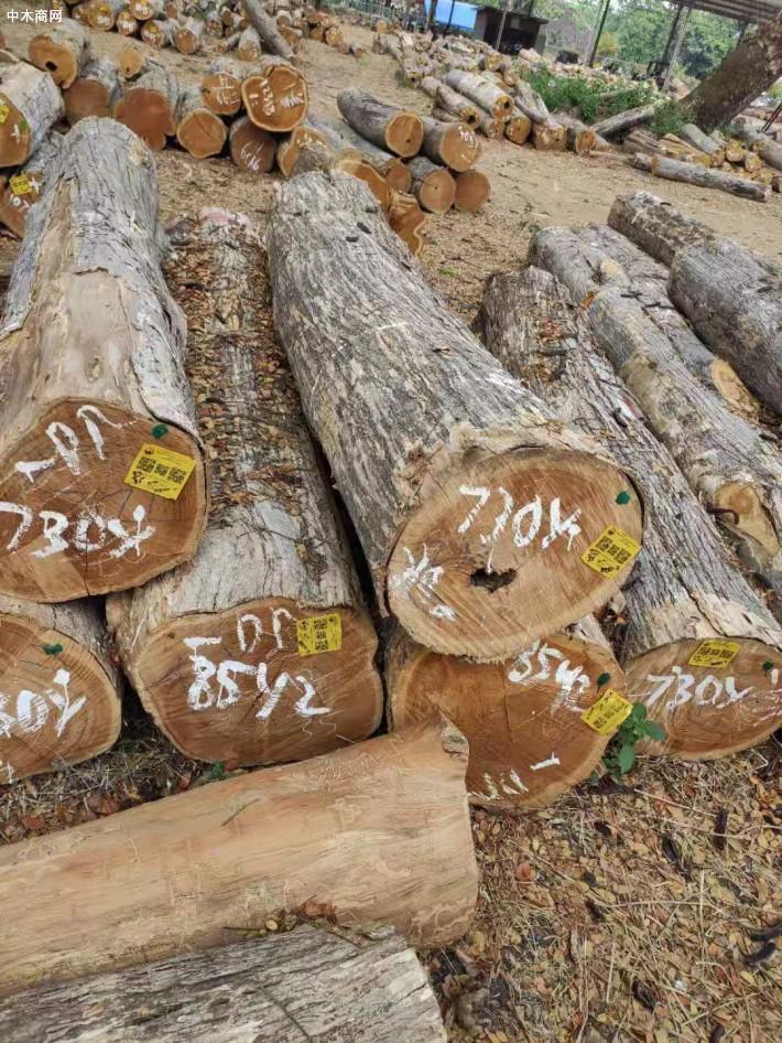 印尼柚木(政府自然林)原木大量原产地批发图片