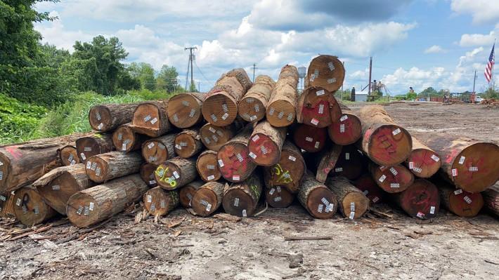 北美高等级红橡原木原产地直销图片
