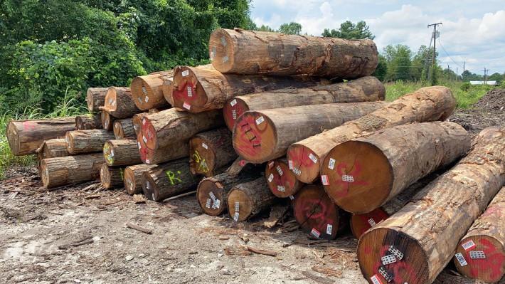 北美高等级红橡原木原产地直销价格