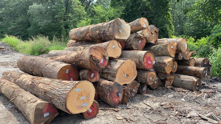 北美高等级红橡原木原产地直销厂家