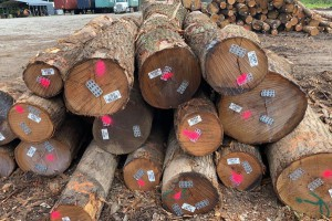 北美高等级红橡木原木原产地直销