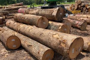 北美红橡原木原产地直销