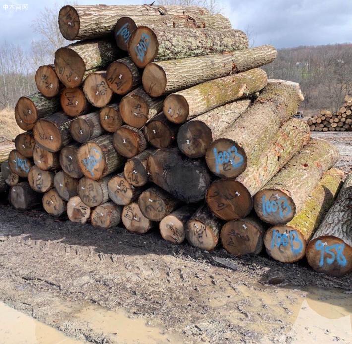 弗吉尼亚山,西维吉尼亚山核桃原木常年批发厂家