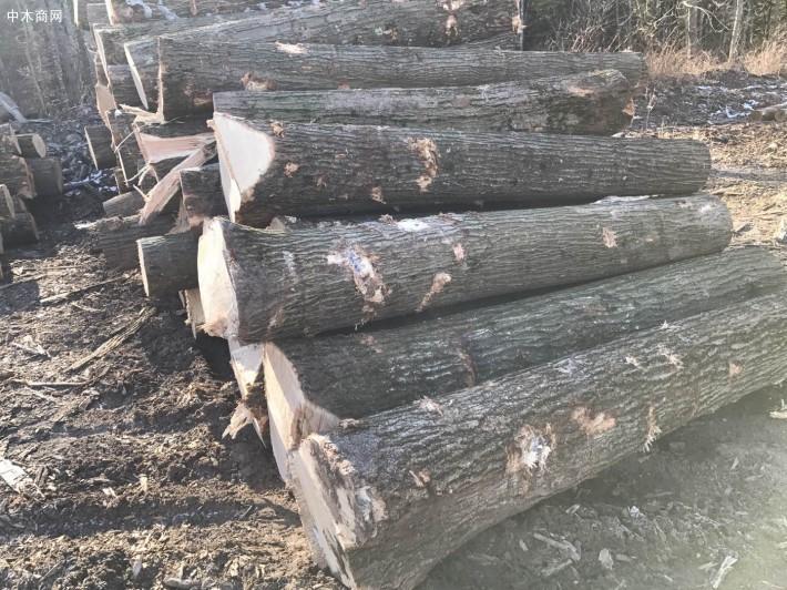 美国红橡木原木厂家批发价格图片