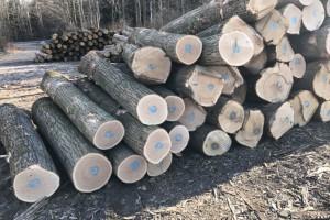 美国红橡木原木厂家批发价格