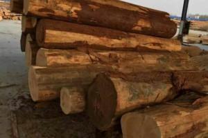 进口雪柏木原木板材厂家批发