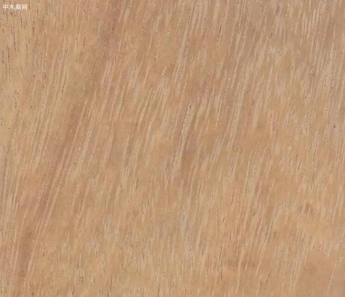 大绿柄桑木材属性及用途图片