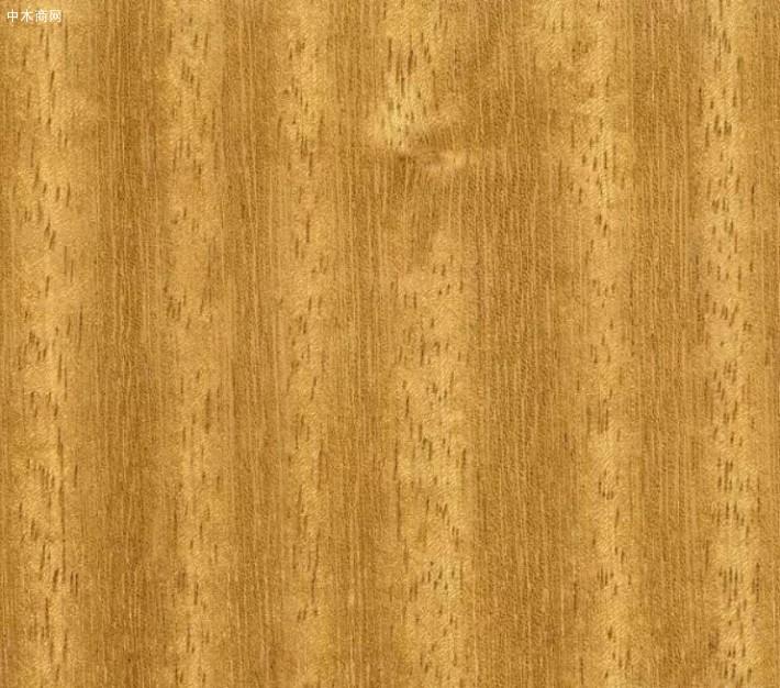 大绿柄桑木材属性及用途批发