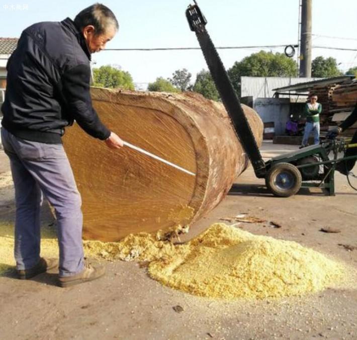 绿柄桑地板的优缺点与圆盘豆的区别有哪些价格