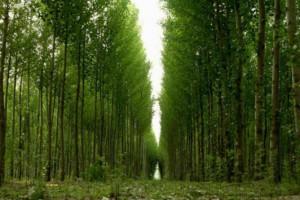 世界资源研究所WRI建立造林项目新平台