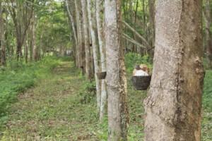 马来西亚木板业务最多只能维持30%-40%的产能水平