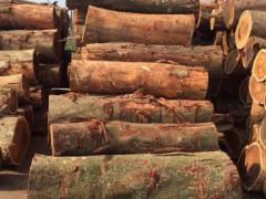 陆海新通道每月原木木材吞吐量可达3万m3