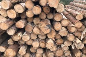 巴西木材采伐受疫情影响严重,采伐授权均被延长到1年