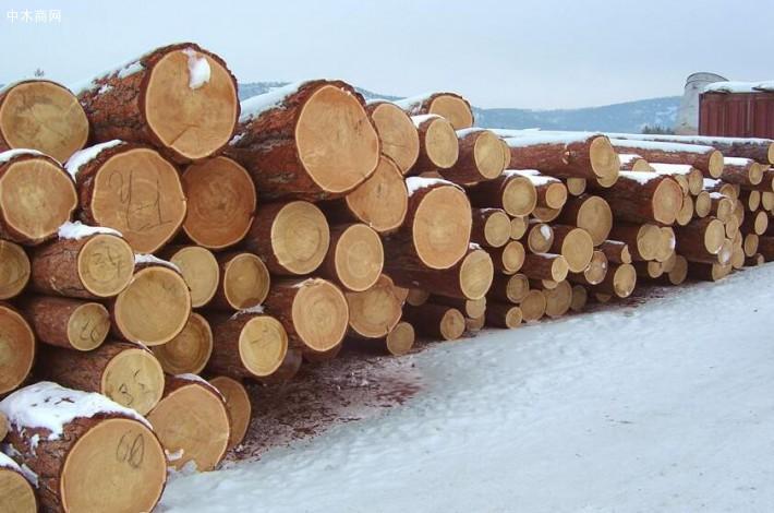 俄罗斯落叶松木特点及原木价格是多少批发