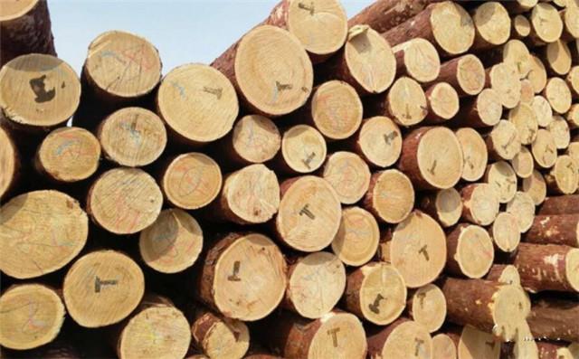 俄罗斯落叶松木特点及原木价格是多少图片