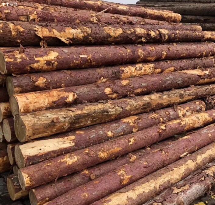 俄罗斯落叶松木特点及原木价格是多少厂家