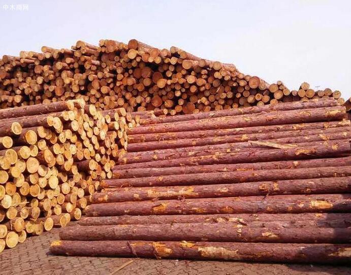 俄罗斯落叶松木材的特点有哪些图片