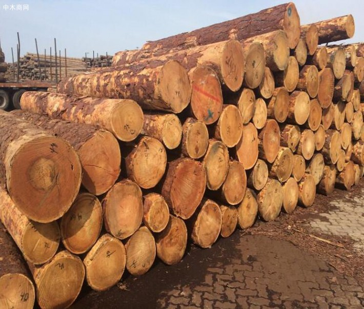 俄罗斯落叶松木材的特点有哪些价格
