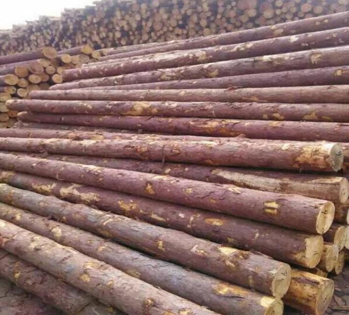 俄罗斯落叶松木材的特点有哪些厂家