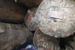 加蓬市场大巴花的库存持有者信心受挫