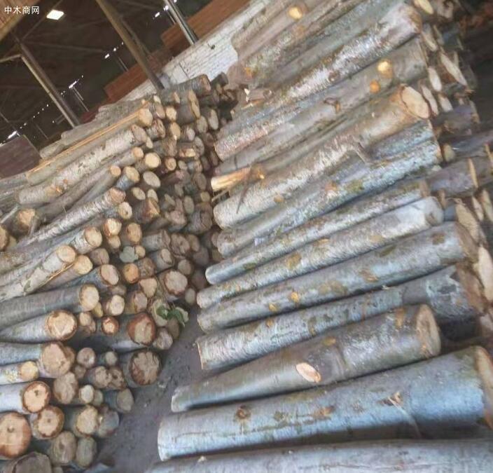 轻木原木价格多少钱一立方米