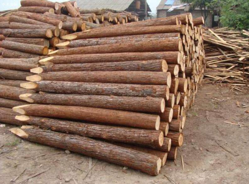 求购:松木木桩
