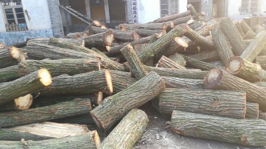 求购:柞木原木