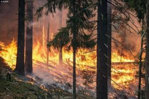 截止9月8日俄罗斯境内共有面积超过813公顷15处森林火灾