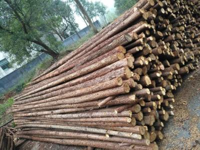 东莞深圳中山广州惠州供应松木桩打桩木河道防护井下支撑木绿化杆