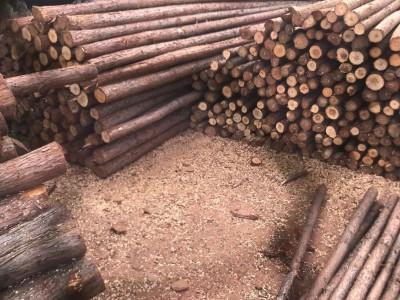 东莞深圳中山广州惠州供应园林支撑防护木绿化杆支撑杉木小条木