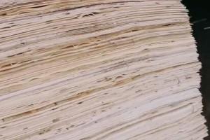 杨木三拼木皮生产厂家