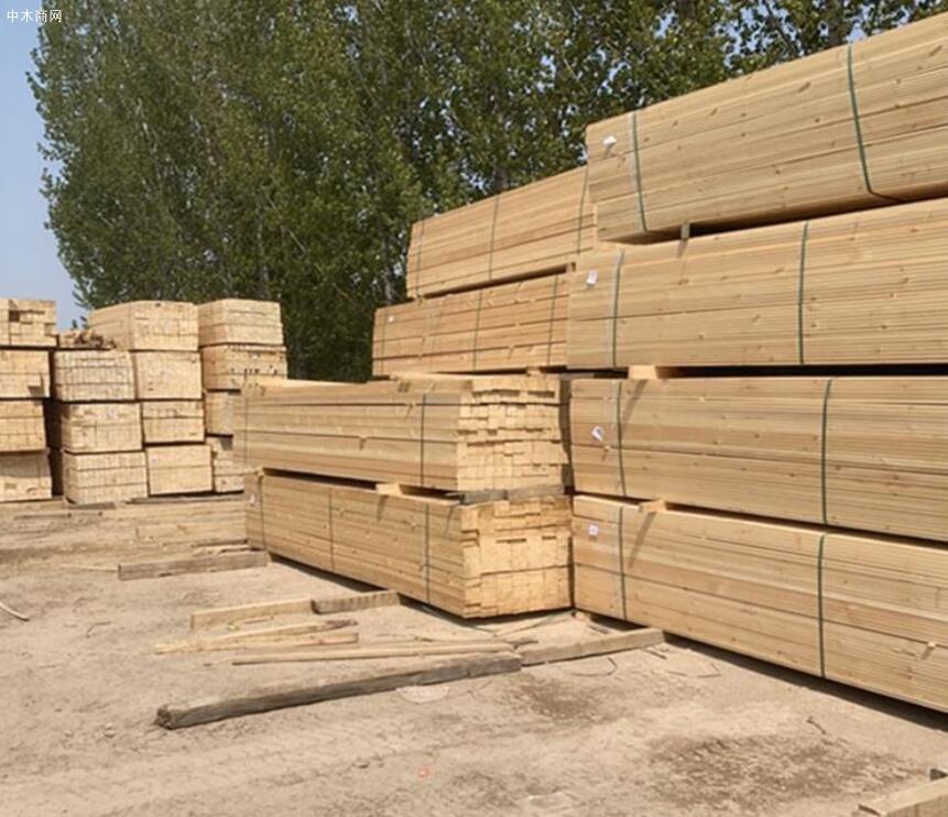 采购:进口俄罗斯樟子松板材
