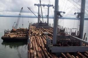 河北口岸首批进境德国散装船原木顺利通关