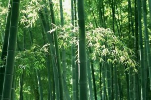 国家林草局竹子研究发展中心项目入选联合国南南合作优秀案例