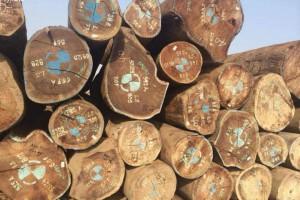 广东市场木材商家北上补仓积极性提高