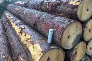 进口欧洲云杉原木价格行情_2020年9月25日