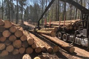 巴西新一轮的伐木进展因雨季和疫情不及预期