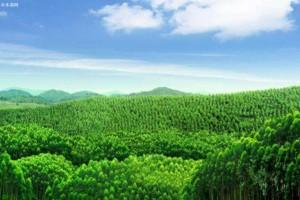 丰林集团拟50亿元投建丰林木材产业园项目签订了