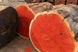 怎么辨别非洲红花梨木?