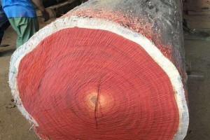 非洲红花梨木是什么木材?