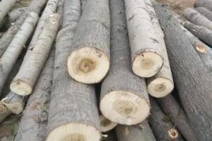 绥芬河口岸俄罗斯杨木原木价格多少钱一立方米_2020年9月29日