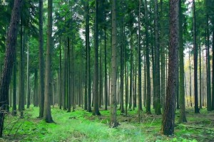 2020一季度广西林业总产值大增三成