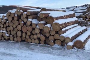 原产地直销俄罗斯樟子松,落叶松原木板材