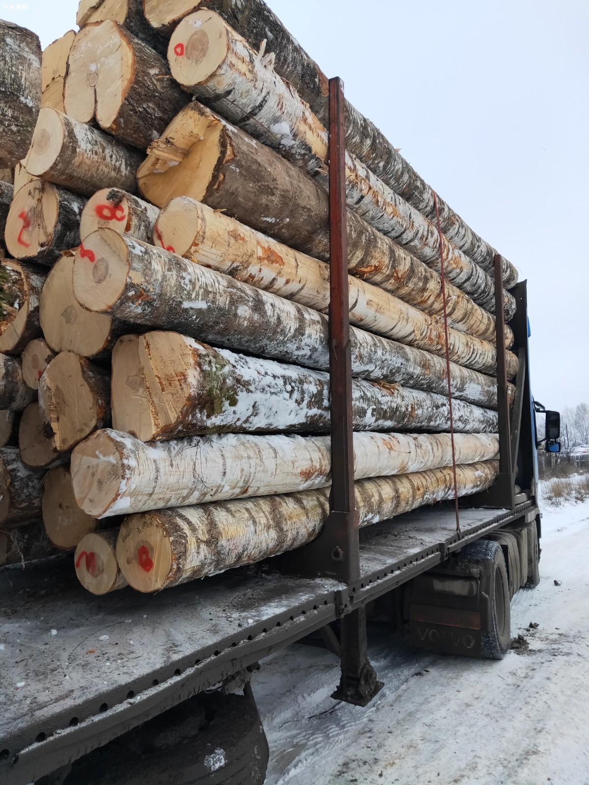 原产地直销俄罗斯樟子松,落叶松原木板材图片