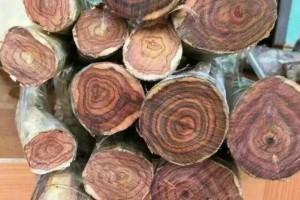 越南中部省份平定1至8月木材出口同比增长21%达到3.73亿美元