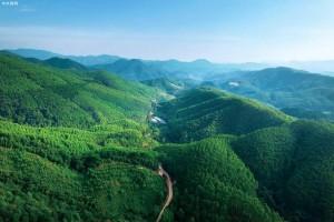 """2020年广西省黄冕林场木材生产调查设计实现三""""最"""""""