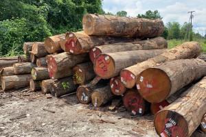 宁夏家凯新木业有限公司虚开609万元发票被移送司法机关