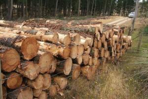巴西松木在中国市场进军速度不理想