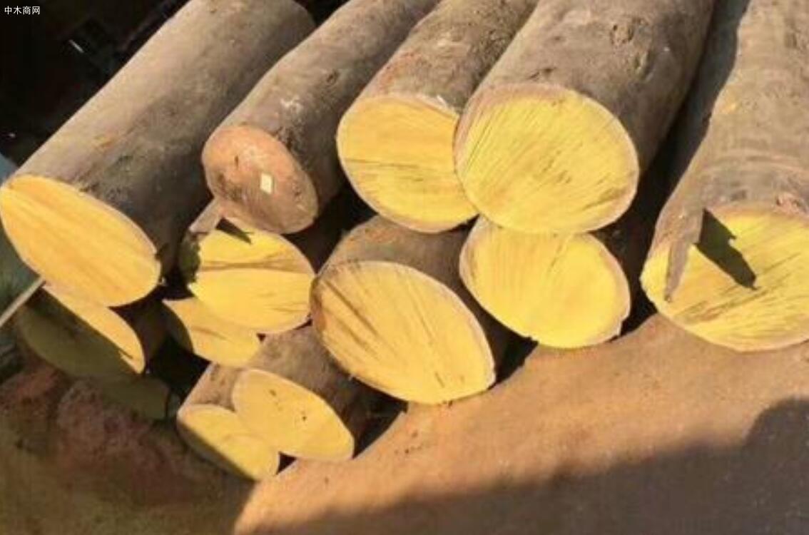 依贝又称蚁木那么市场上的依贝木与重蚁木有什么区别价格